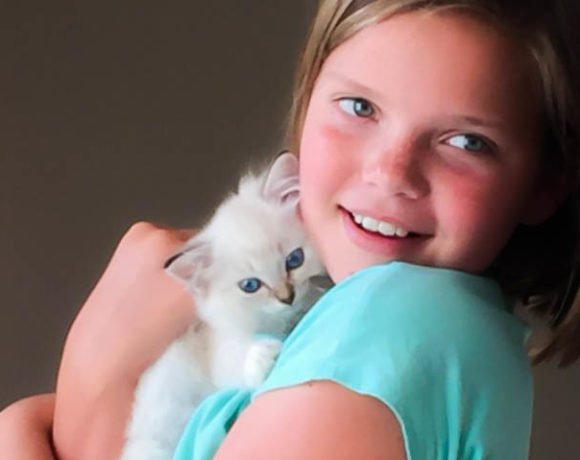 Female Blue Point Lynx held by Child